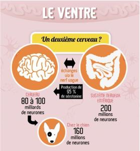 intestin 2e cerveau microbiome