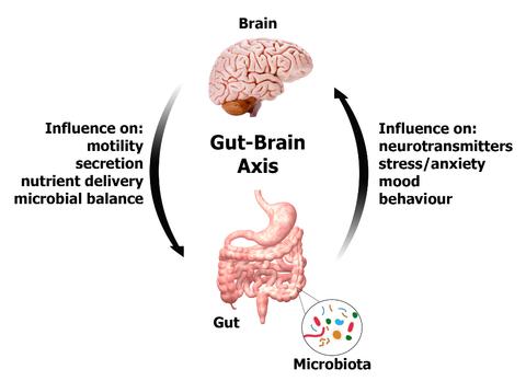 Intestin Cerveau Microbiome