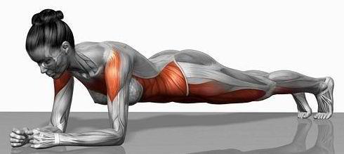 bienfaits planche abdominale