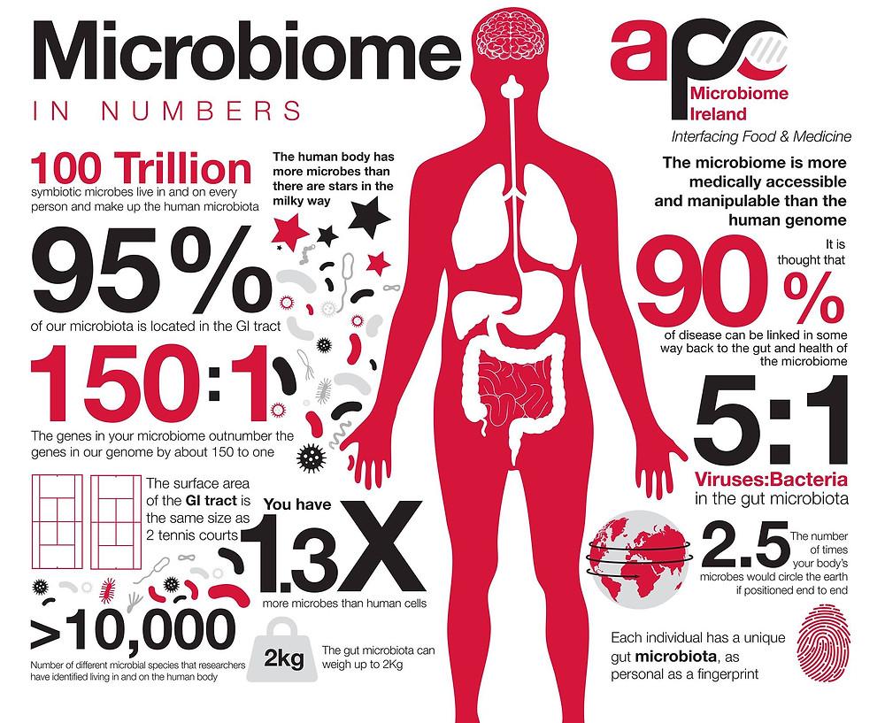 Microbiome et entrainement