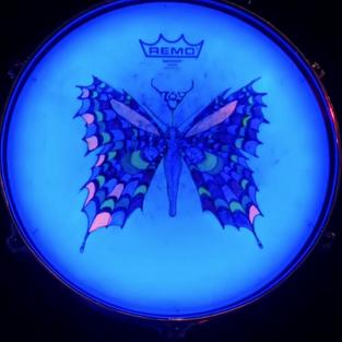Butterfly Tom Design