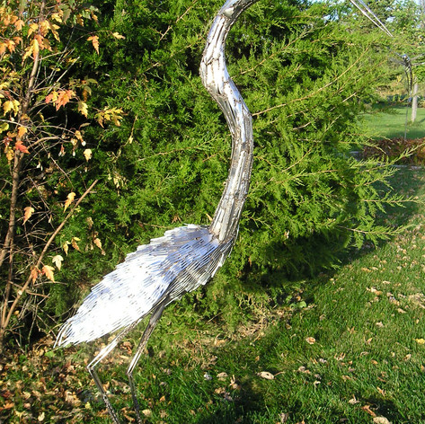 Fork Feathered Heron