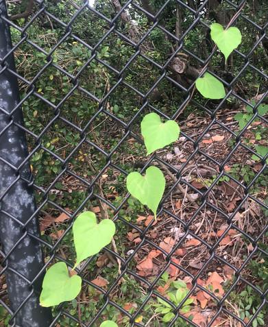 Nature sends love