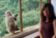 monkey4_edited_edited.jpg