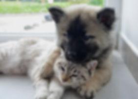 dog-cat-2904616_1920.jpg