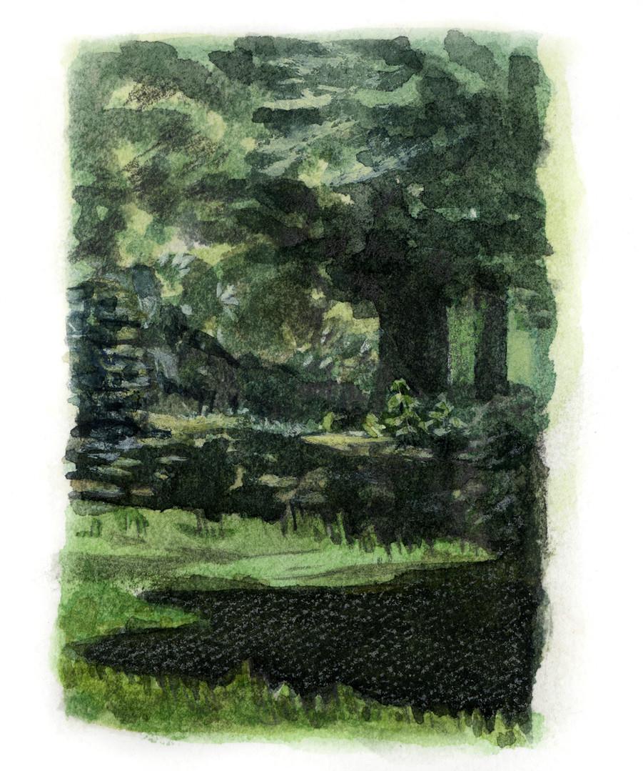 Waldstück-Arcegno `17.jpg