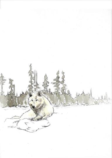 Symbiose Rabe Wolf.jpg