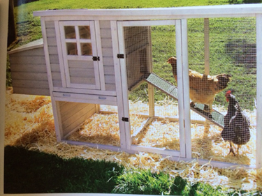 Chicken rental hen rent coop for rent massachusetts ma Rhode island ri RI