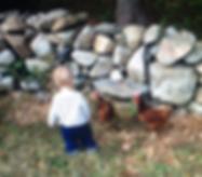 hen rental in Massachusetts Rhode Island children chickens