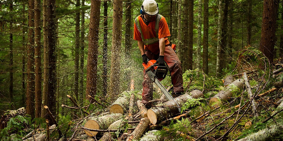 AHCMOM213 Operate and Maintain Chainsaws