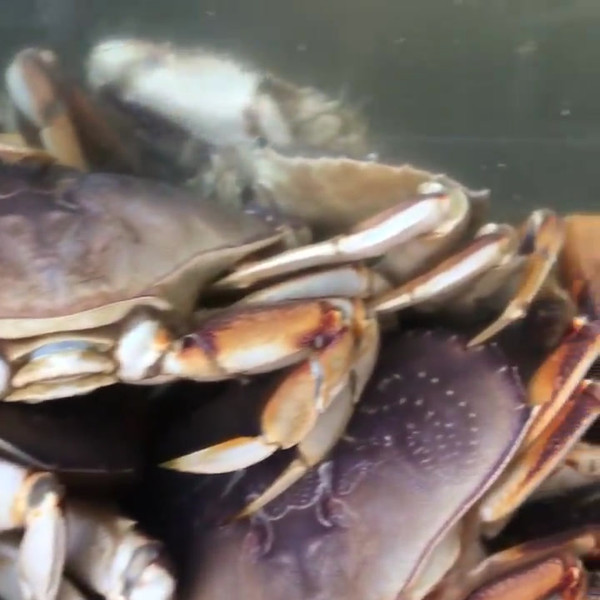 Crab Video.mp4