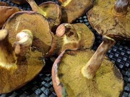 Shrooms are here! Wild mushrooms at Queen Victoria Market, Autumn 2017
