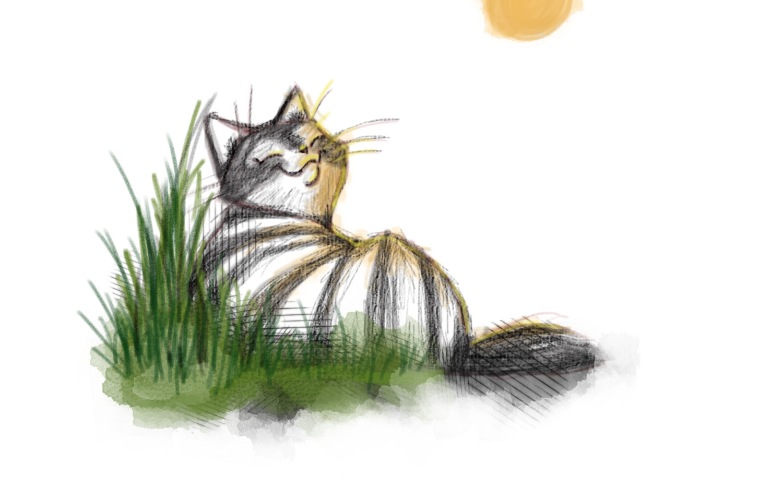 kočky2.jpg