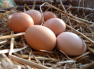 Cholestérol : n'ayez plus peur des oeufs !
