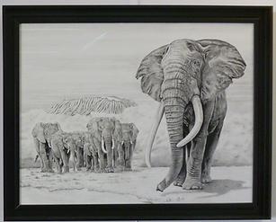 LES ELEPHANTS ET LA MATRIARCHE 65X50 Encre 2500 EUROS.png