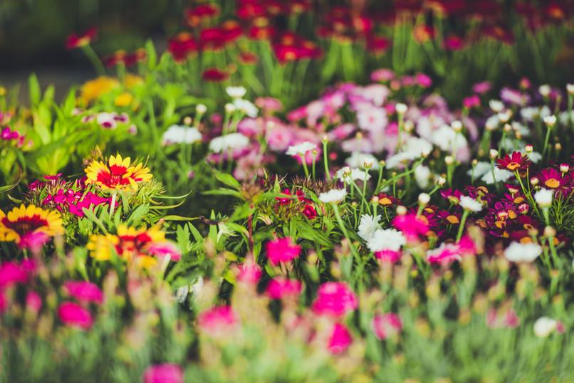 colorful-garden-flowers-PDPE3SM.jpg