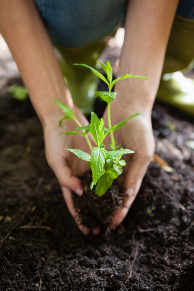 cropped-hands-of-female-planting-seedlin