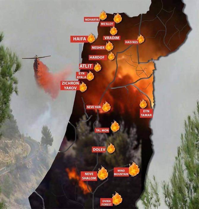 Восстановим леса Израиля