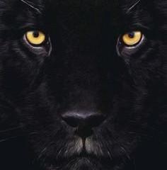Black Panther's Potent Medicine