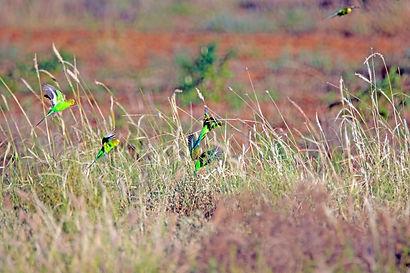 Tussock grasslands