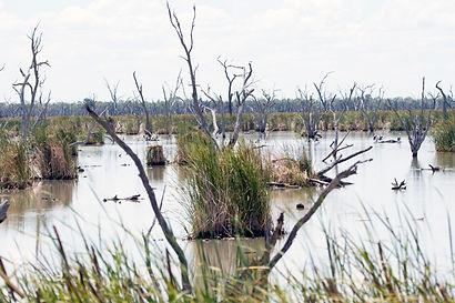 Temperate wetlands