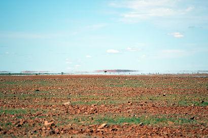 Gibber plains