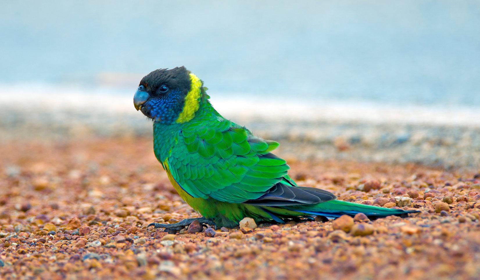 Twenty-eight Parrot