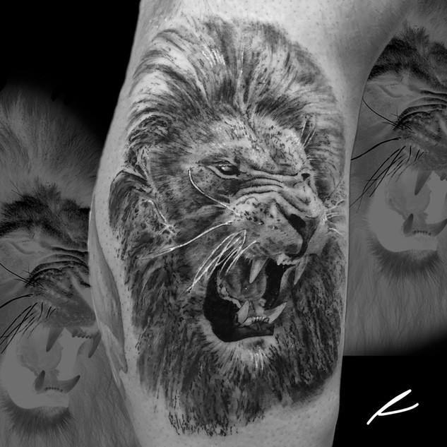 Black and grey lion