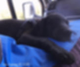 Rescue Puppy Travelling Van Life