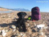 Rescue Puppy Elaia Beach, Peloponnese, G