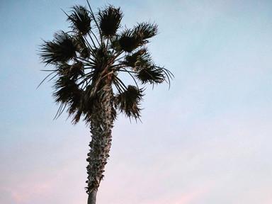 Pastels & palms 💗💗💗
