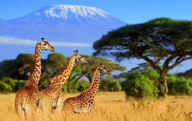 africa-safari-Cover1.jpg
