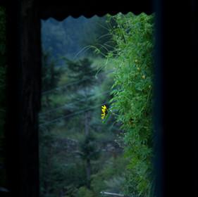 Kuflon, Uttarakhand