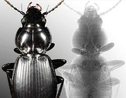 cover beetles only.jpg