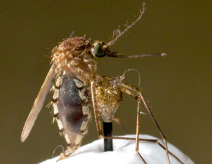 New paper on mosquitoes in Scientific Reports