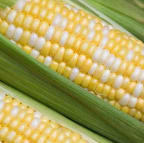 Field Corn vs. Sweet Corn