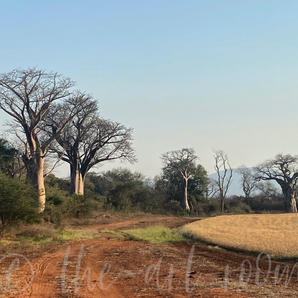 Zambia1 | Janine W. | P.O.A.