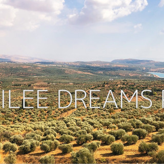Trees flowers & herbs2: Galilee the land of olives