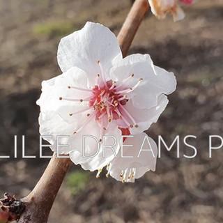 Trees flowers & herbs10: flower of an Almond tree