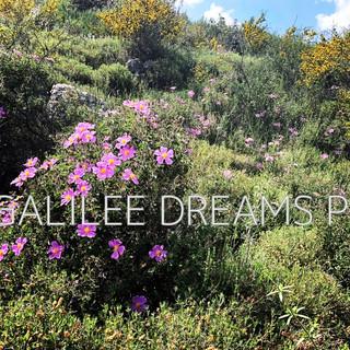 Trees flowers & herbs5: Galilee nature in spring.jpg