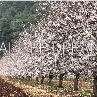 Trees flowers & herbs4: A Galilee almond grove