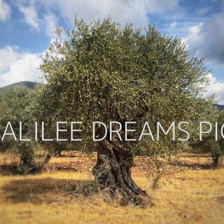 Trees flowers & herbs1: Galilee the land of olives