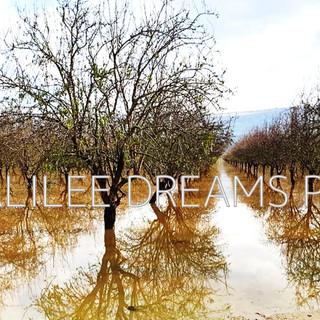 Trees flowers & herbs7: Galilee grove - winter time