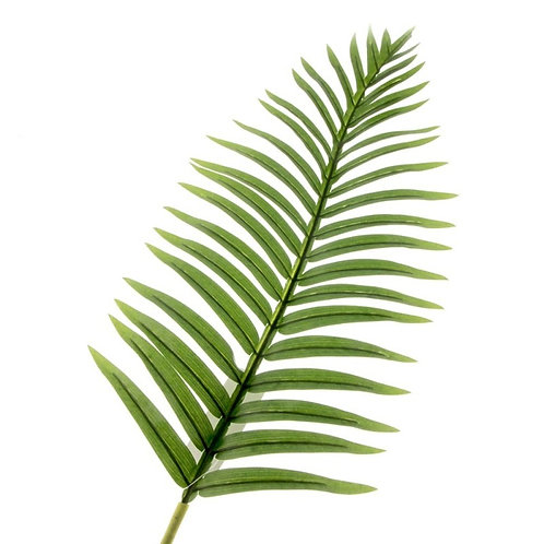 Fern Palm Leaf