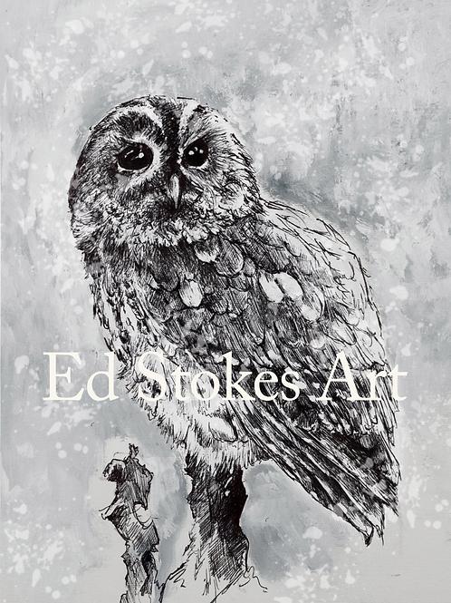 Snowy Tawny Owl Card