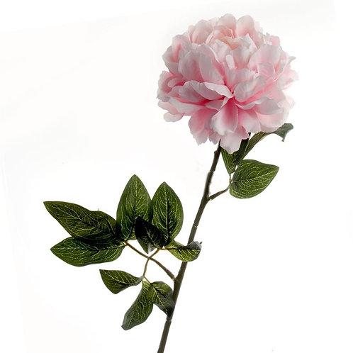 Large Peony - Blush Pink