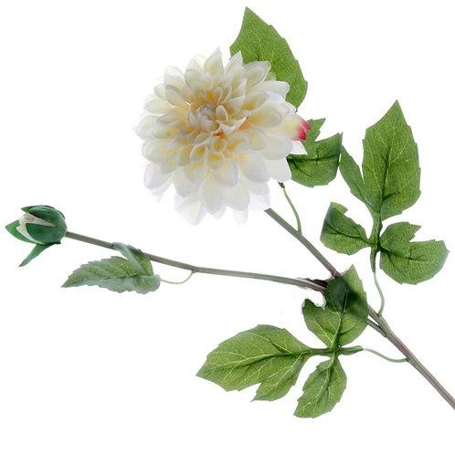 Dahlia - Cream