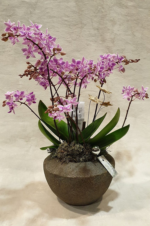 Pretty In Pink Orchid Planter