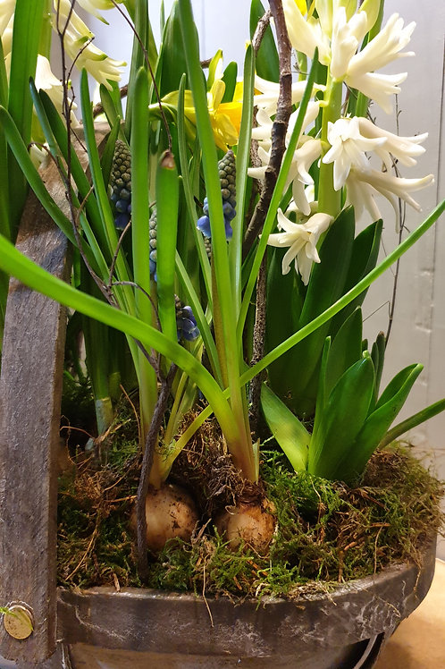 Spring bulb trug