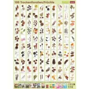 Dried seeds, pods and fruits Poster